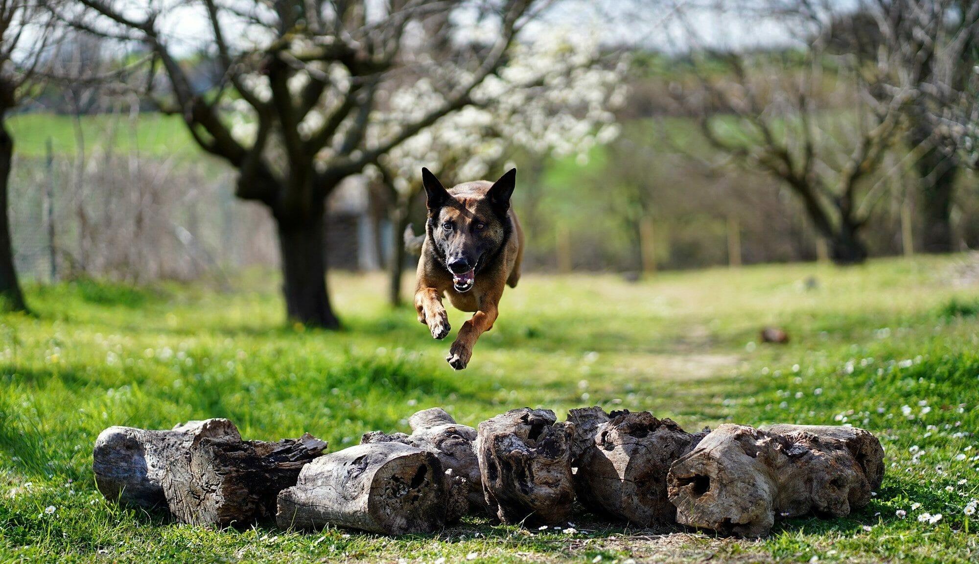 Addestramento cani - addestramento obbedienza