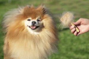 Spazzolatura del cane