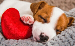 Cani sognano e dormono
